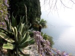 yuccas, wisteria in bloom, palms, cypress