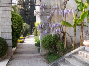 wisteria and palms