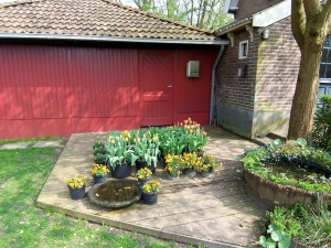 orange flowers, red barn