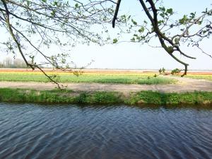 Lisse landscape
