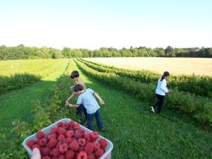 rasberry picking